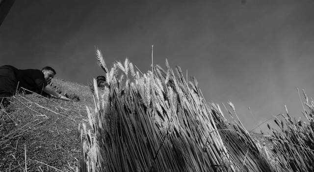 Thatching Explained
